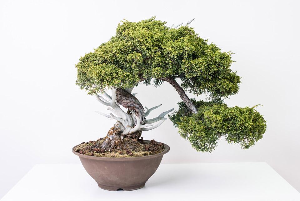 bonsai-colmenar-02